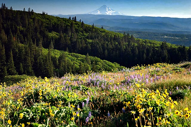 Mount Hood from McCall Point