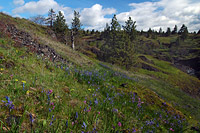 catherine_creek_lower_hillside.jpg