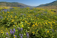 rowena_plateau_facing_east.jpg