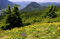 wind_mtn_from_dog_mtn_trail_1.jpg